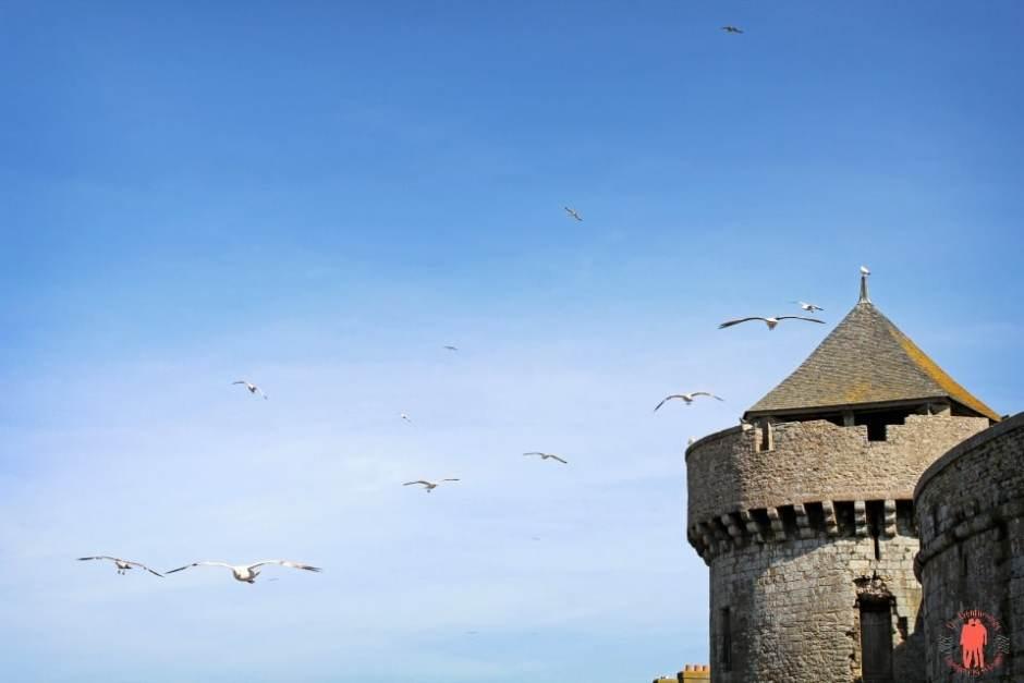 Mouettes volantes - Visiter Saint-Malo