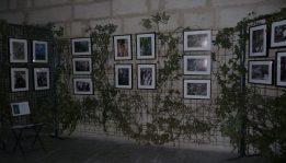 l'expo de Jean Donnet