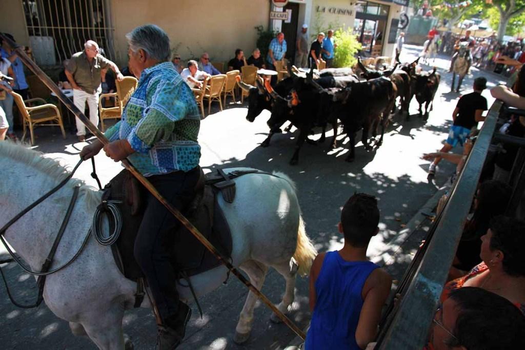 courses-camarguaises