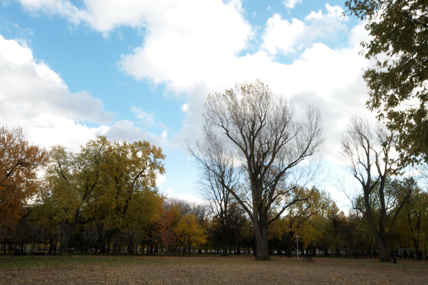 Chronique d_un jour d_automne_003