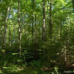 Trees at Fort Creek Conservation Area