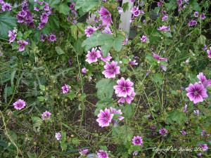 10022006--PurpleFlowers