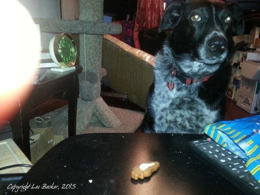 Kaylee can't choose between treats.