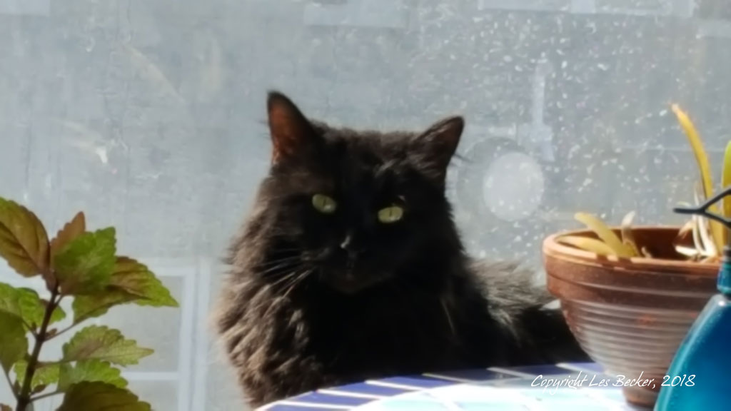 Queen of the Windowsill…
