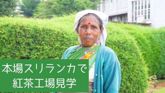 ヌワラエリヤ紅茶工場見学