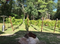 Vineyard 3