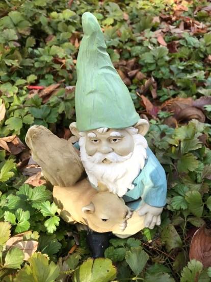 Gnomes 6