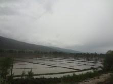 Rizicultures, beaucoup de respect pour les paysans qui pataugeaient nus pieds sous la pluie.