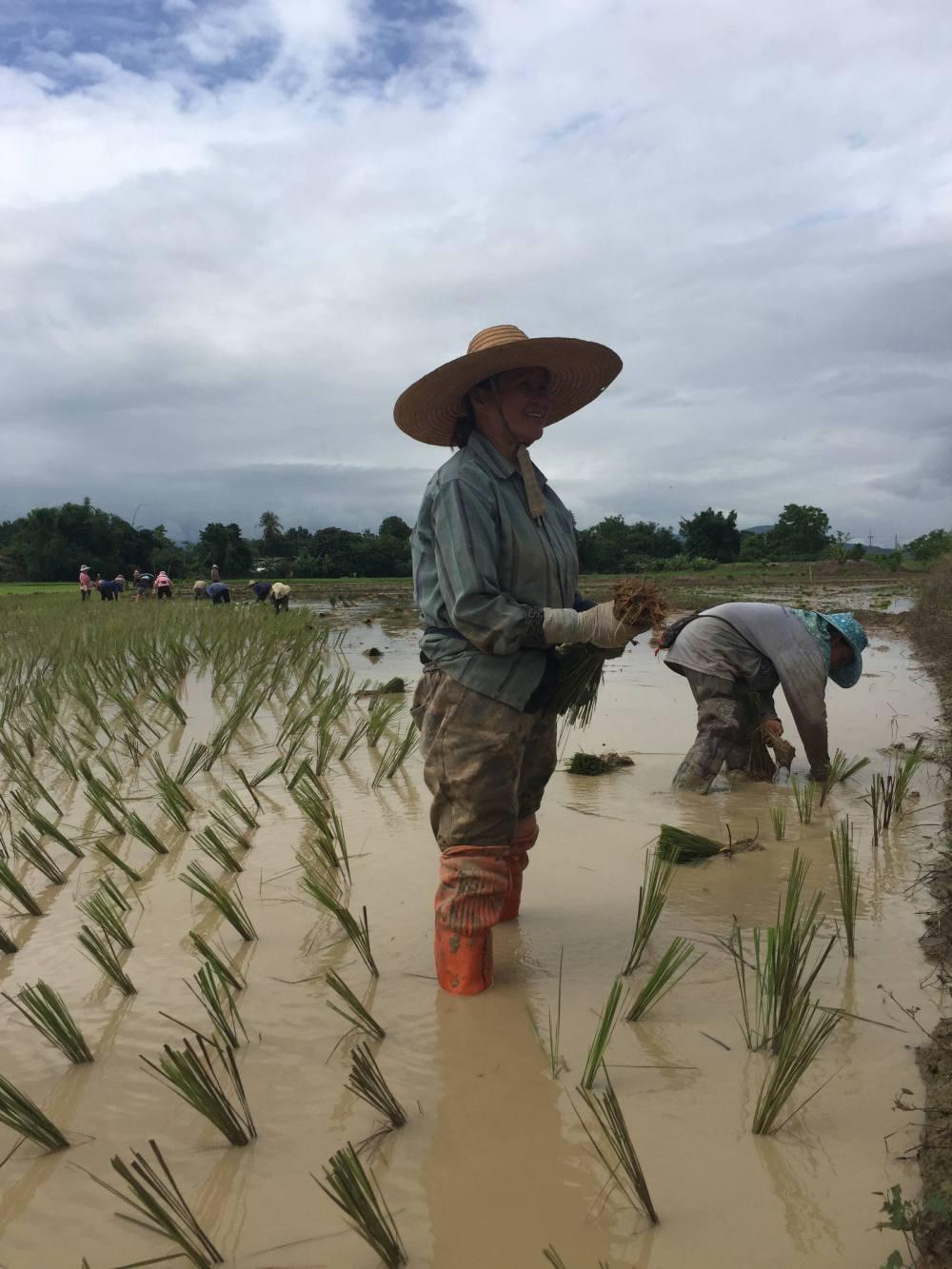 plantation par les bons plans de stef