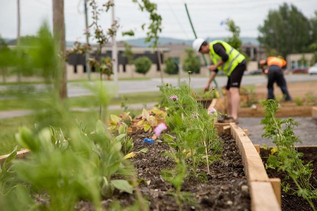 Les jardins partagés sont en plein essor. Rejoints à présent par les poulaillers partagés. Photo : DR