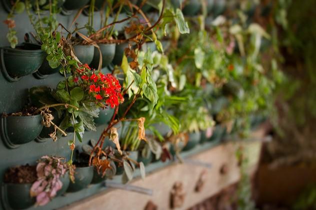 Pus de vert dans la ville : de la jardinière au mur végétal comme ici. Les habitants présentent aussi des idées très originales... Photo : Carolina Lena Becker