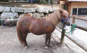 espace poneys