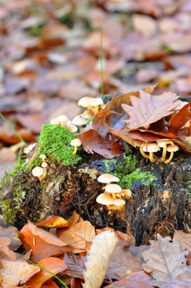 Petits champignons sur une souche