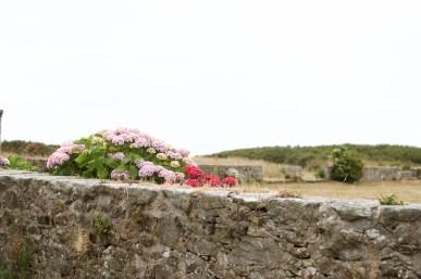 Mur et hortensias
