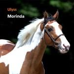 Ulyss Morinda