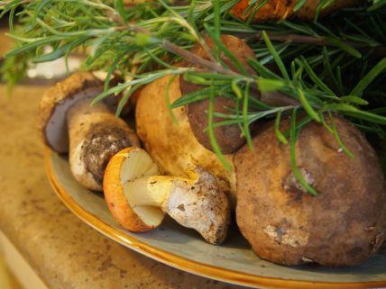 La cuisine italienne : funghi del bosco