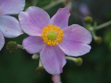 fleur - Boboli (bis)