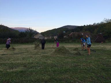 Ramassage du foin au rateau et à la fourche en Albanie