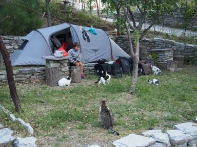Camping avec chats