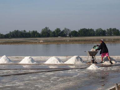 La récolte du sel (2)
