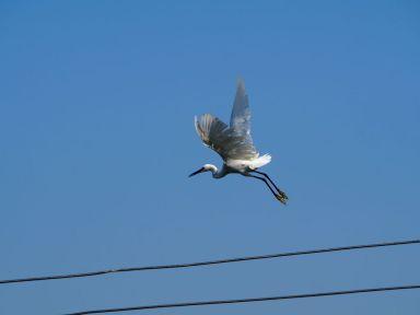 le parc national Khao Sam Roi Yot regorge d'oiseaux