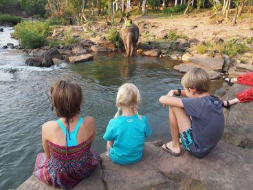 Tad Lo : la baignade des éléphants