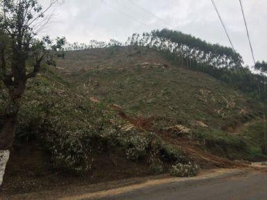 Les forêts du Guangxi sont quasi toutes des plantations