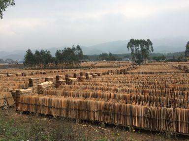 L'industrie du bois est gigantesque dans cette partie de la Chine