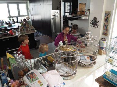 Soins des perroquets avec Florence