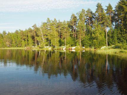Les résineux longent les lacs et nos routes