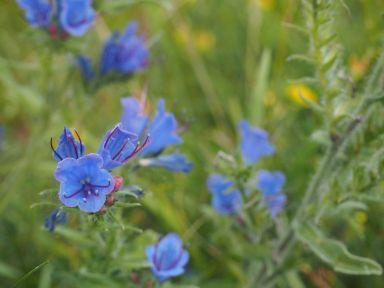 Des fleurs tout le long de trajet