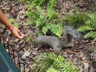Nos premiers pas nous amènent à Central Park avec ses cohortes d'écureuils
