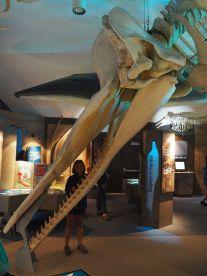 Inès et le squelette de cachalot