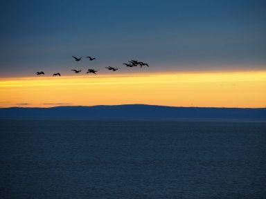 Pleine période de migation dans la région