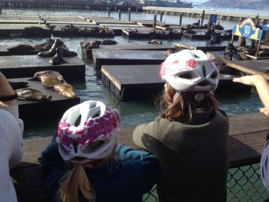 Premier contact avec les lions de mer au pier 39