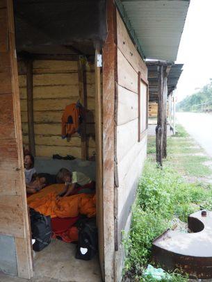 Dodo dans une case en bois
