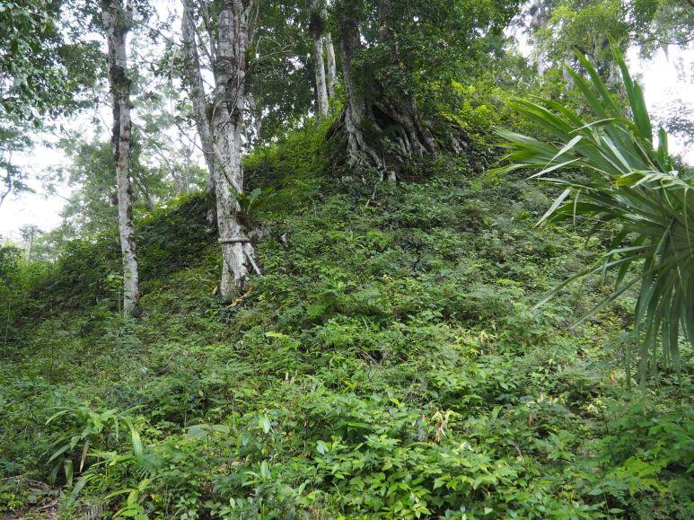 Un temple encore sous la végétation