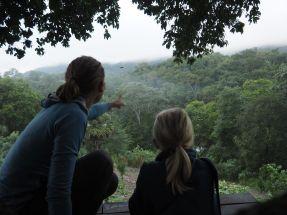 Dans la jungle, nous écoutons et ...