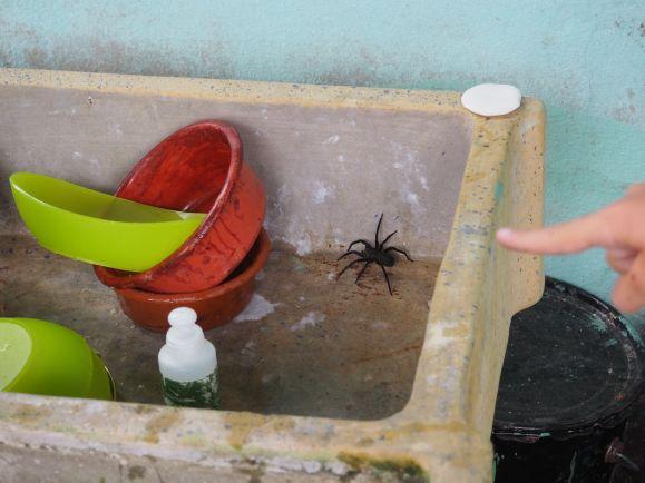 Brr ! Qui fait la vaisselle ce matin ? C'est Albane qui aura une grosse frayeur !