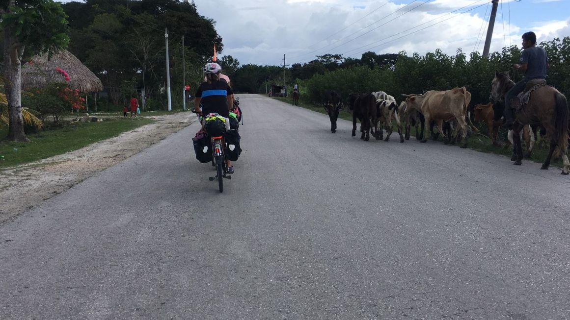 Un rancho sur son cheval mène son troupeau