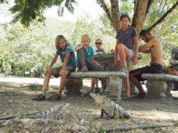 des iguanes rigolos