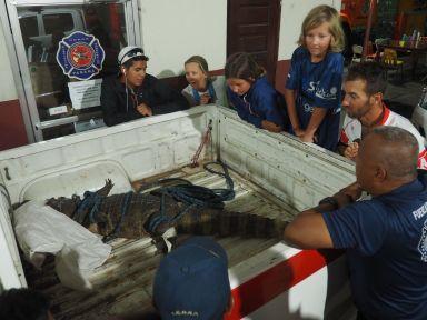 Ce soir les pompiers on été récupérer un crocodile dans une maison !