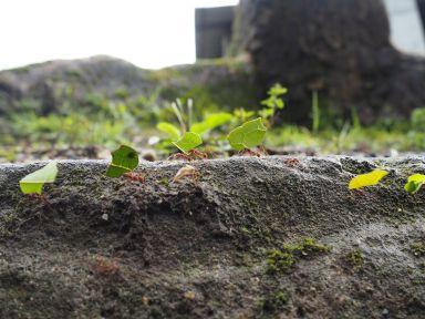 Incroyables fourmis