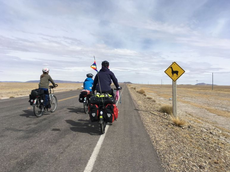 Les vigognes ne sont jamais loin sur l'altiplano