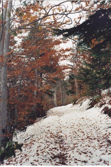 Sentier col Lorial 11.11.2003