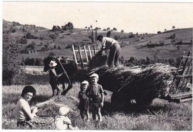 Août 1955 Fenaison