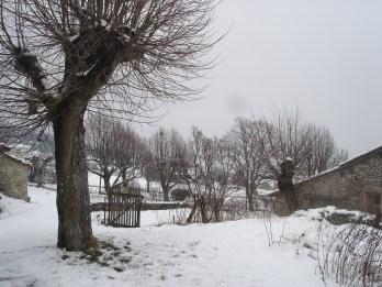 Tilleuls en hiver 23.02.2015