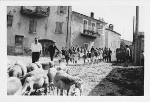 Défilé du troupeau 15.08.1961