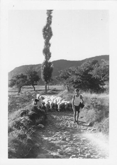 Jean-Claude le berger