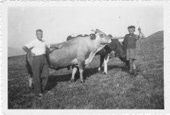Yves et les vaches
